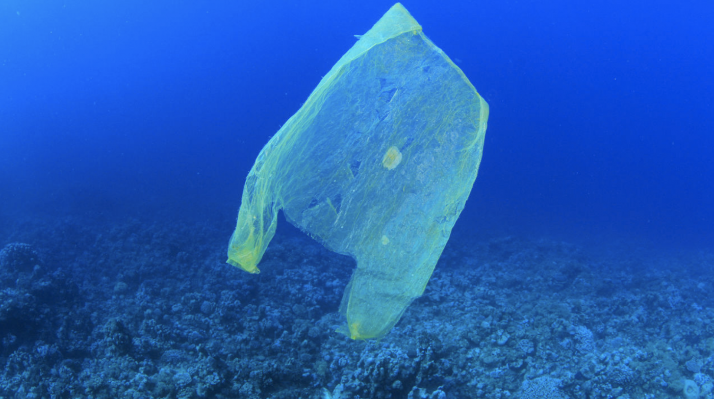 Roslynn McCann on Plastic Bags and Environmental Impacts – Get an Earful