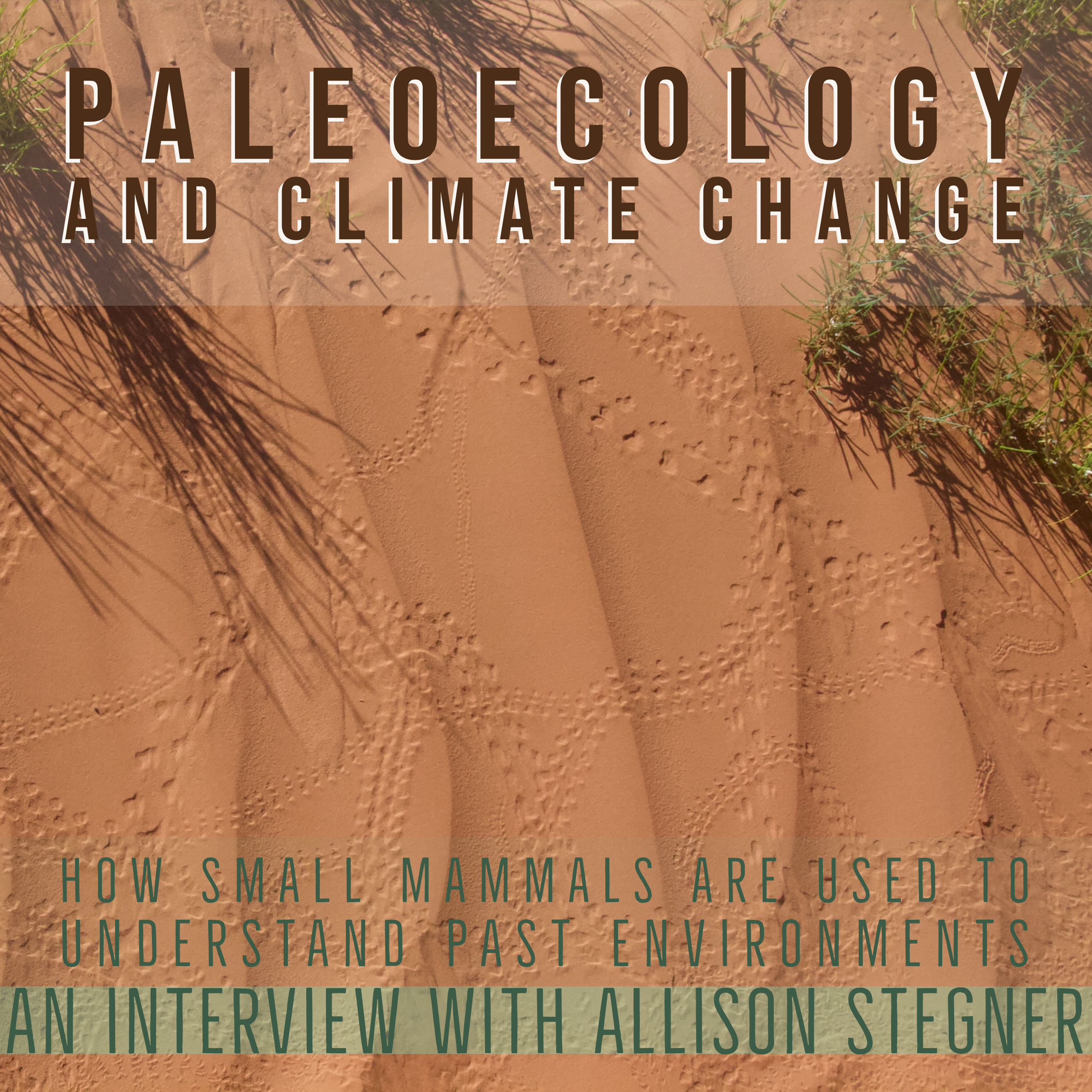 Paleoecology and Climate Change