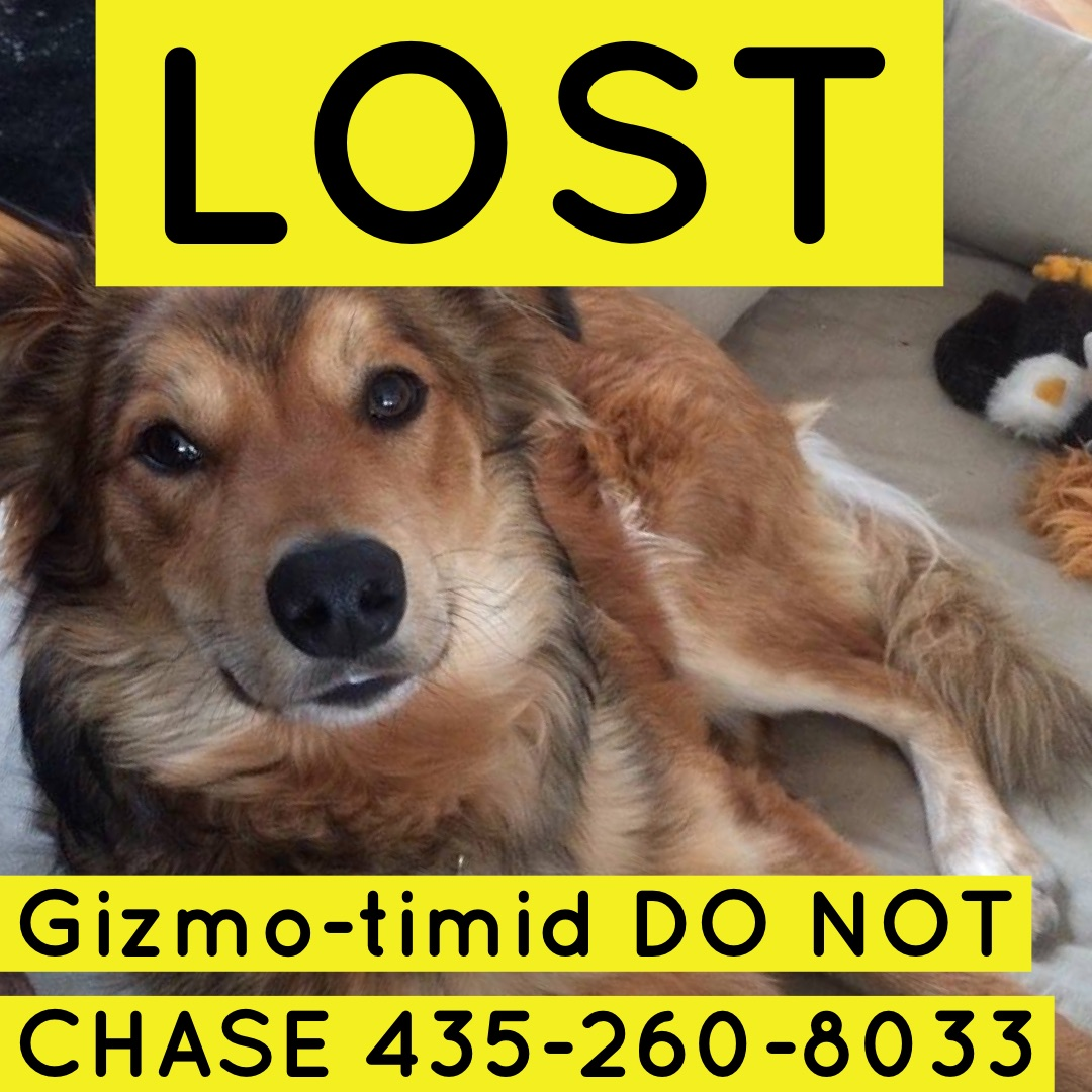 Gizmo is lost!