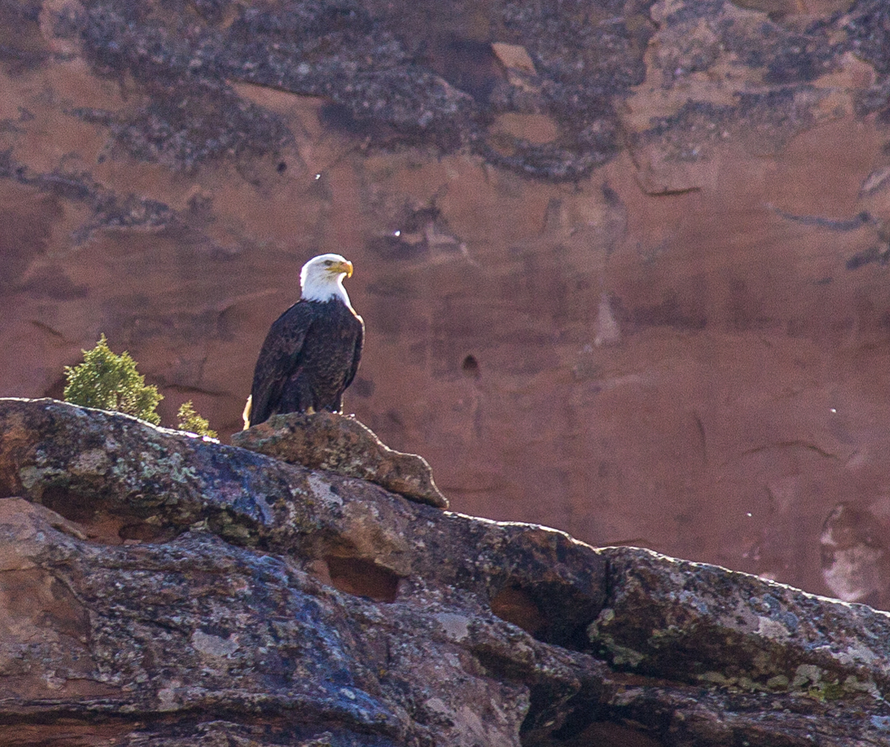 Eagle Float on the Colorado River