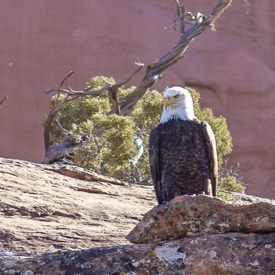 Eagle Float on the Colorado