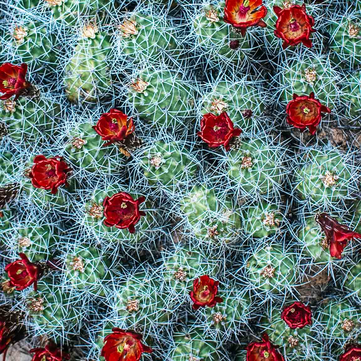 Explore blooming desert wildflowers with Joel Tuhy