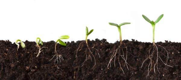 Conditions for Seed Germination